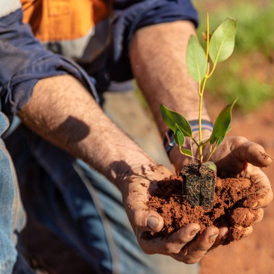 Donate a Native Tree or Shrub