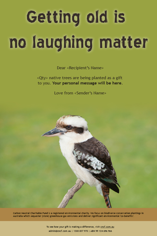 laughing kookaburra eCard